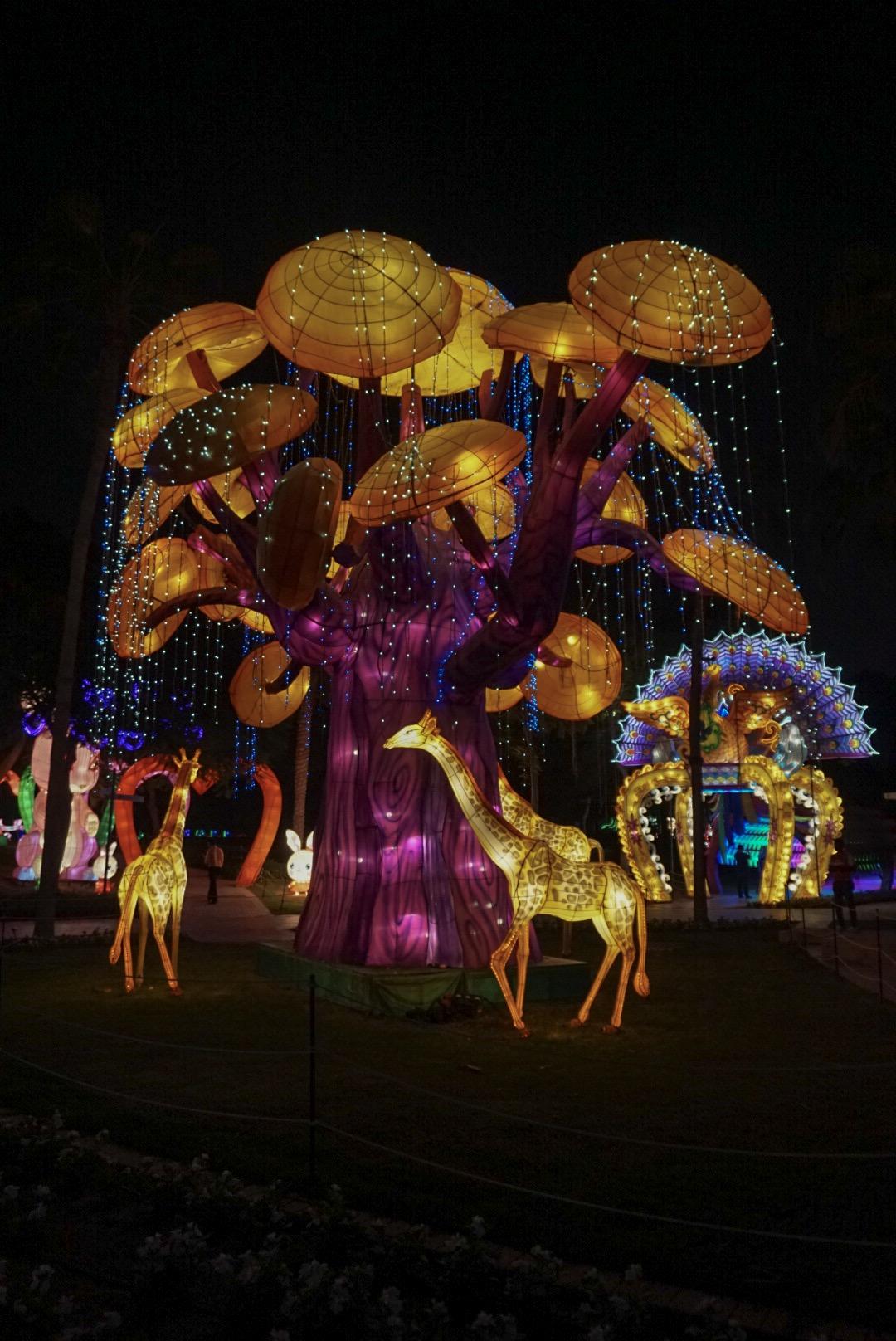 Dubai Garden Glow 4