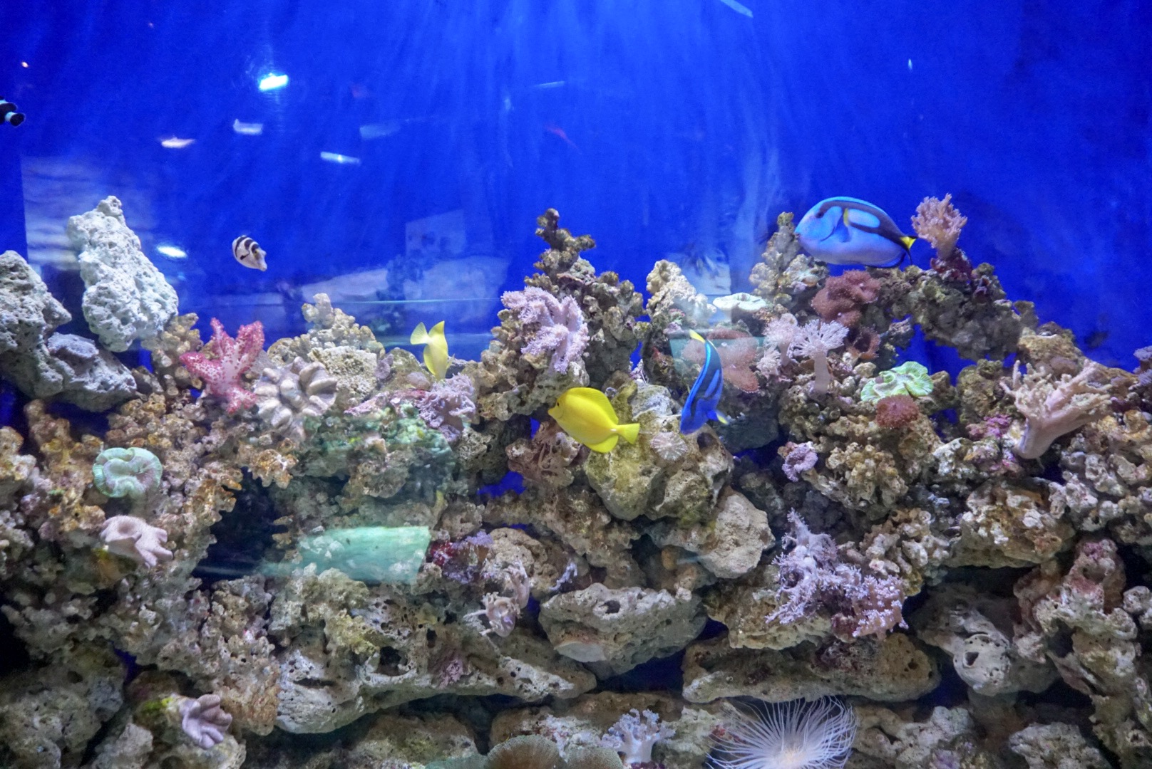 Dubai Mall Aquarium 3